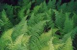 id: at008 image: at08-00ferns.jpg